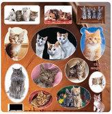 Domácí mazlíčci - Kočky - Magnetky na ledničku