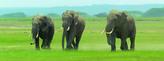 Záložka - Úžaska - Sloni