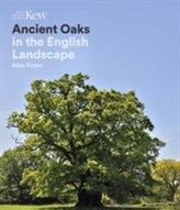Ancient Oaks