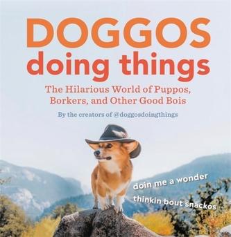 Doggos Doing Things