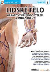 Lidské tělo 1 - Naučné karty