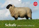 Schafe zählen leicht gemacht! (Wandkalender 2020 DIN A4 quer)