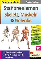 Stationenlernen Skelette, Muskeln & Gelenke