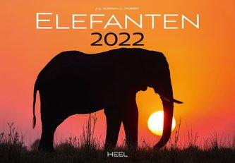 Elefanten 2022