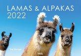 Lamas und Alpakas 2022