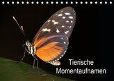 Tierische Momentaufnahmen (Tischkalender 2021 DIN A5 quer)