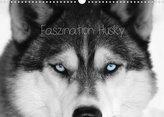 Faszination Husky (Wandkalender 2022 DIN A3 quer)