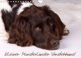 Kleiner Münsterländer Vorstehhund (Wandkalender 2022 DIN A4 quer)