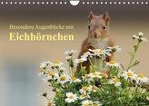 Besondere Augenblicke mit Eichhörnchen (Wandkalender 2022 DIN A4 quer)