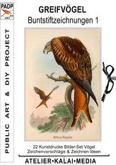 Greifvögel : Buntstiftzeichnungen 1