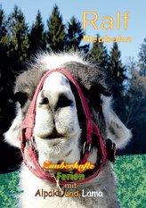 Zauberhafte Ferien mit Alpaka und Lama