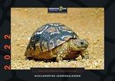 Schildkröten-Jahreskalender 2022