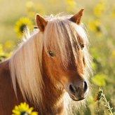 Koně 3x49 dílků