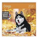 Kalendář nástěnný 2020 - Dogs