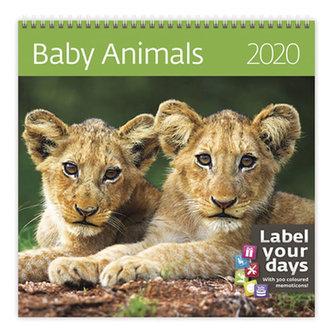 Kalendář nástěnný 2020 - Baby Animals