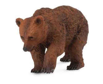 Medvěd hnědý - mládě