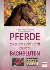 Pferde gesund und vital durch Bachblüten