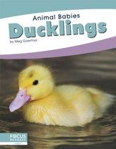 Animal Babies: Ducklings