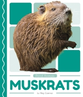 Pond Animals: Muskrats
