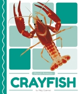 Pond Animals: Crayfish