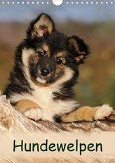 Hundewelpen (Wandkalender 2021 DIN A4 hoch)