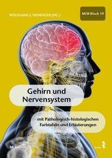 Gehirn und Nervensystem