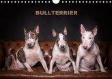 Bullterrier (Wandkalender 2021 DIN A4 quer)