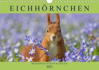 Eichhörnchen im Königlichen Garten (Wandkalender 2021 DIN A4 quer)