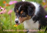 Australian Shepherd 2021 (Wandkalender 2021 DIN A4 quer)